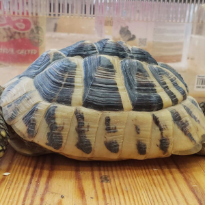 Jak pečovat o želvu zelenavou?
